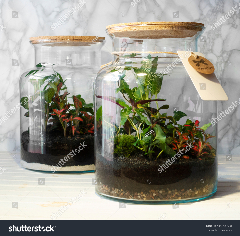 Small Decoration Plants Glass Bottlegarden Terrarium Stock Photo Edit Now 1456105550