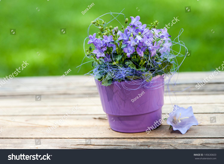 Little Bell Flower Purple Flower Pot Stock Photo (Edit Now ...