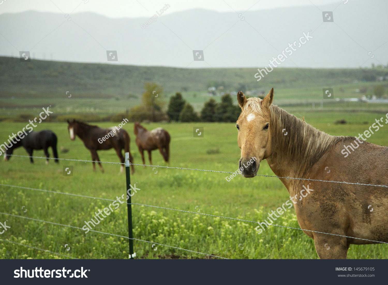 Horses Standing Behind Wire Fence Pasture Stock Photo (Edit Now ...