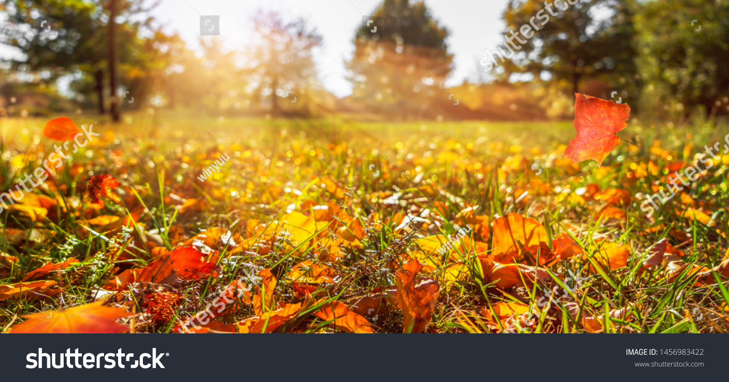 sunshine in autumnal idyllic landscape, fall leaf in meadow, blurred natural autumn background, beautiful empty autumn idyll
