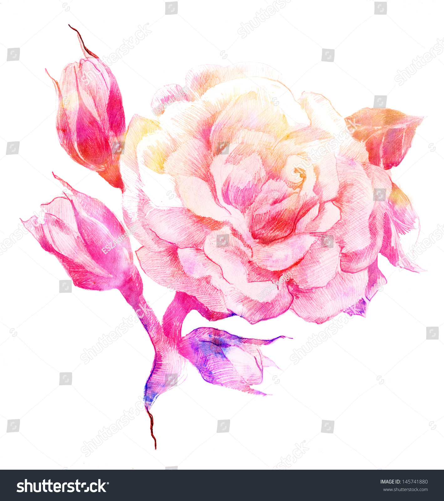 Flower Rose Color Sketch Hand Drawing Stock Photo 145741880  Shutterstock