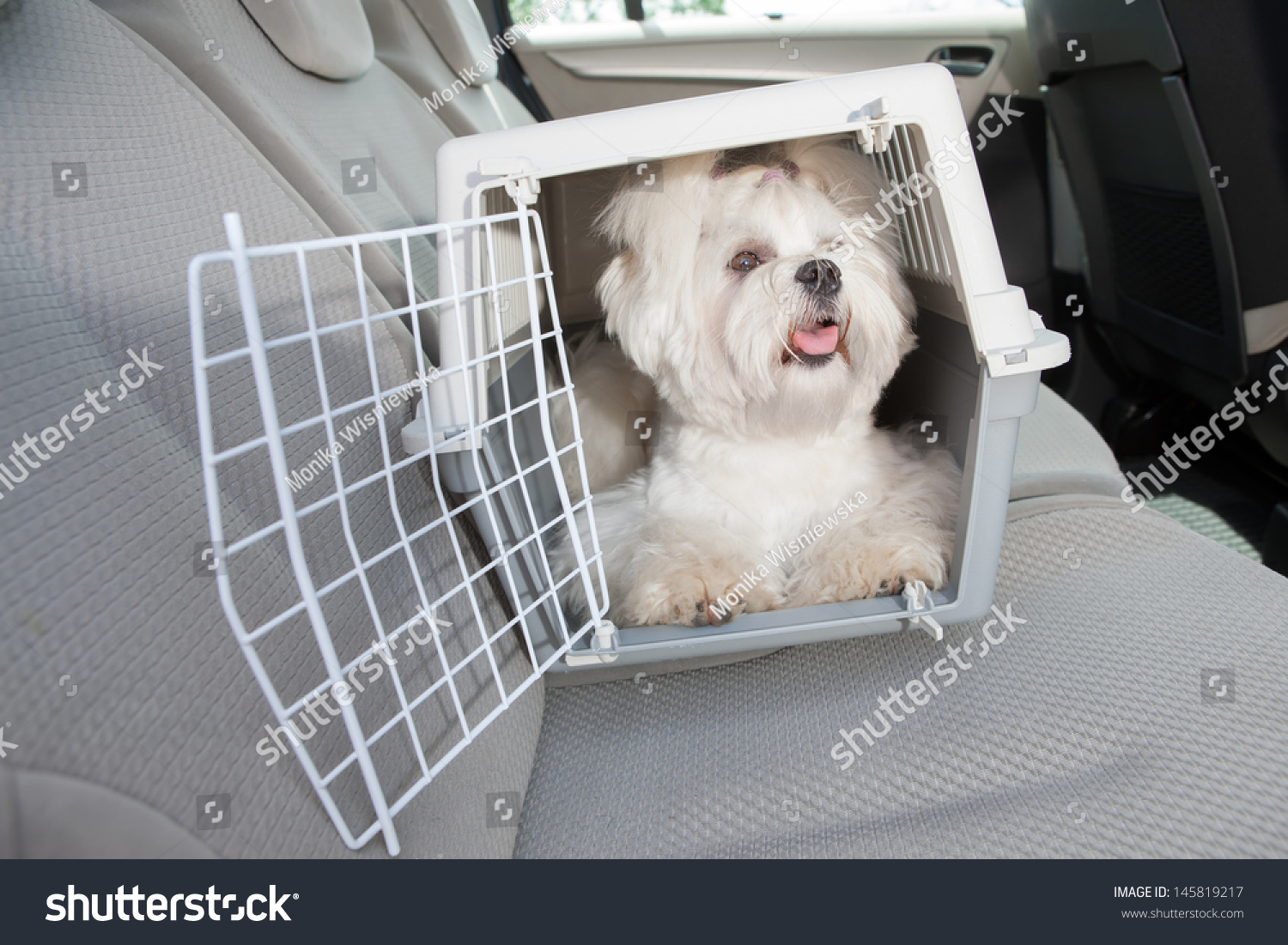 how to crate train a maltese puppy