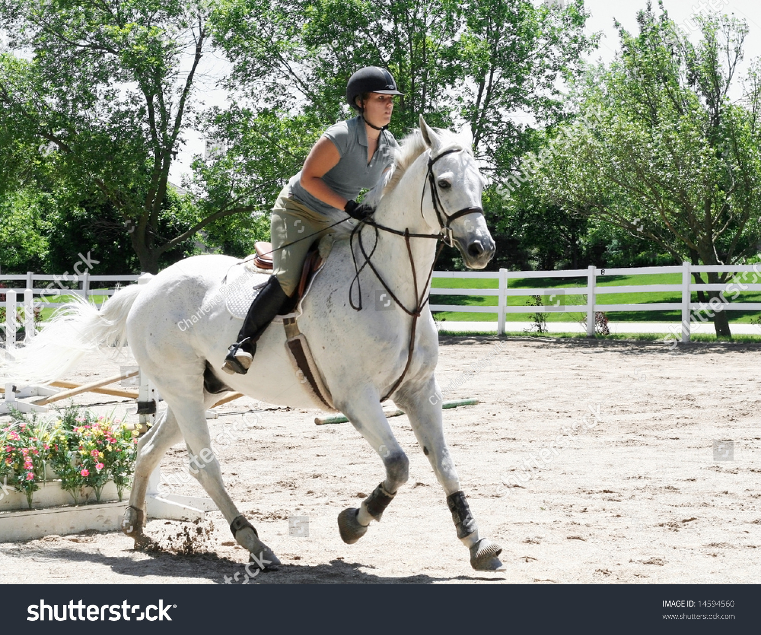 Beautiful White Horse Lady Jumping Hurdles Stock Photo Edit Now 14594560