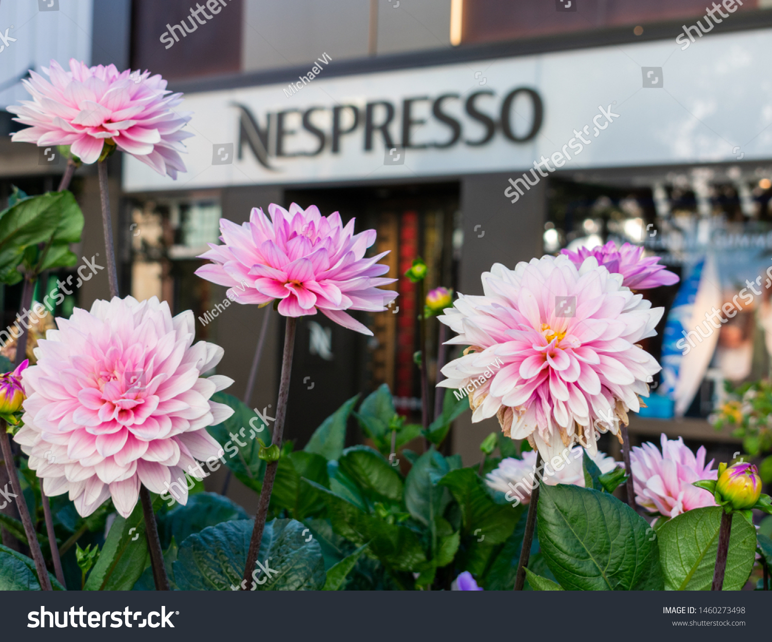 Dahlia Flowers Bloom Front Nespresso Retail Stock Photo Edit Now