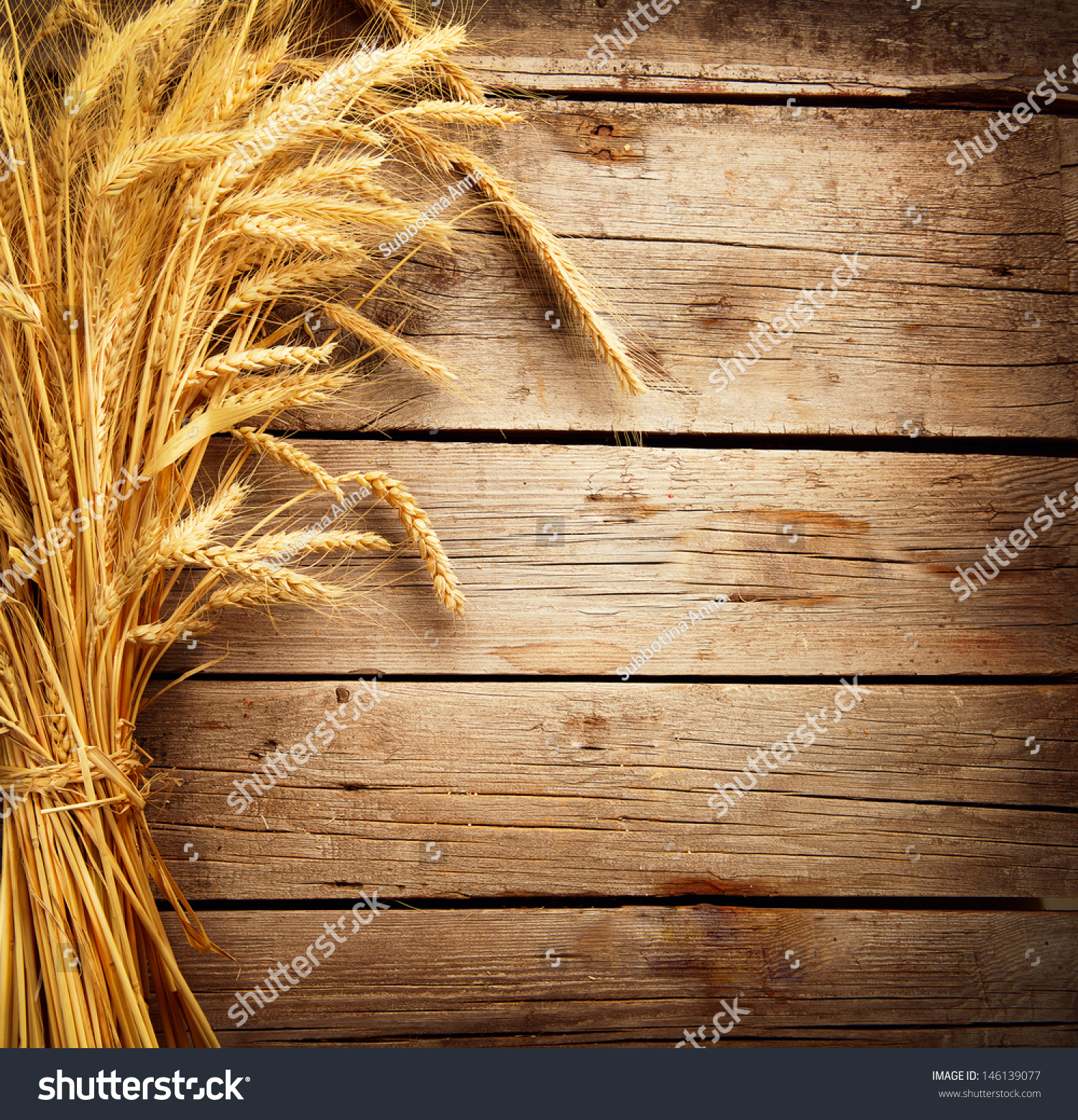 Wheat ears on wooden table sheaf stock photo