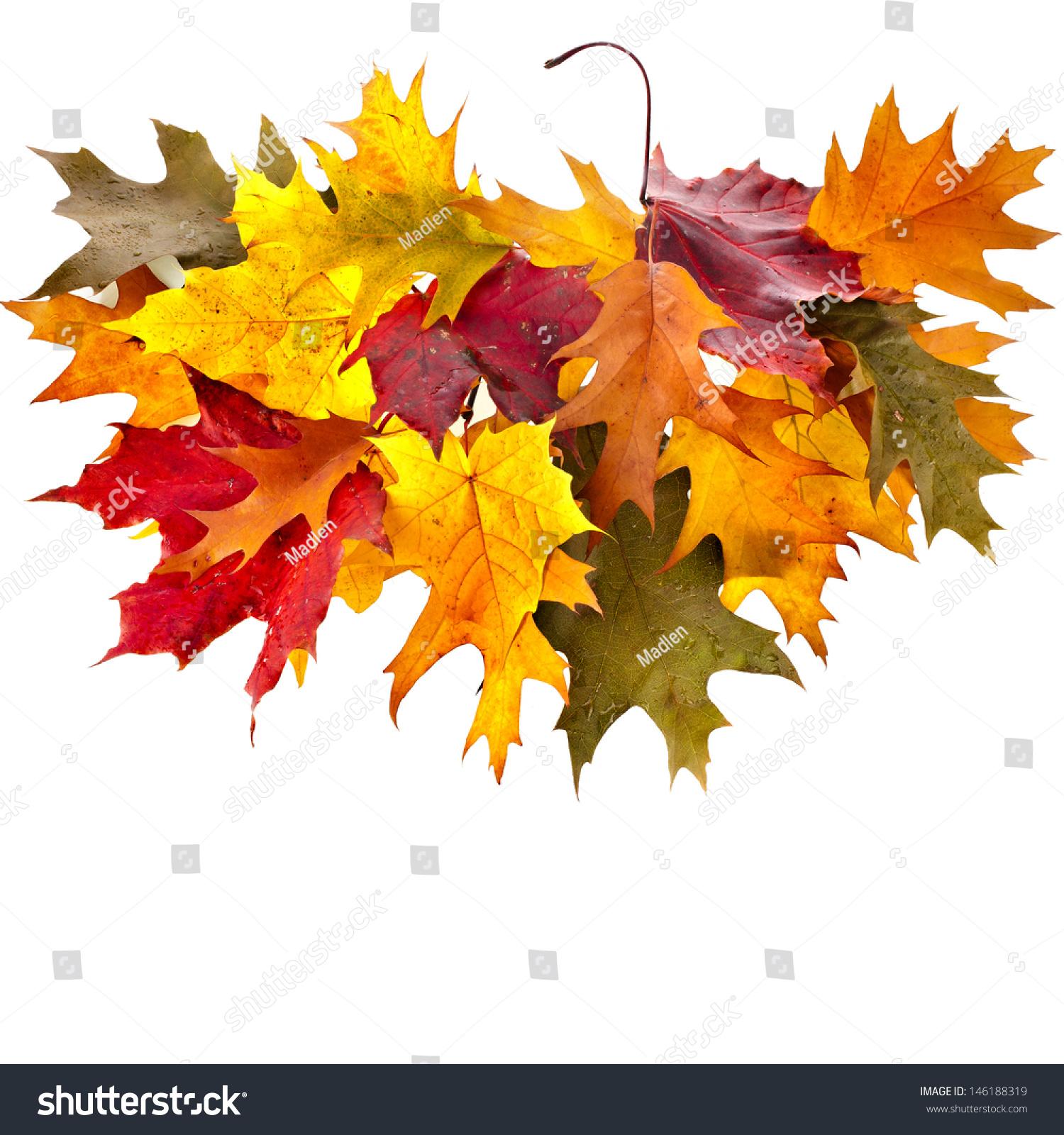 autumn fall tree backgrounds - photo #33