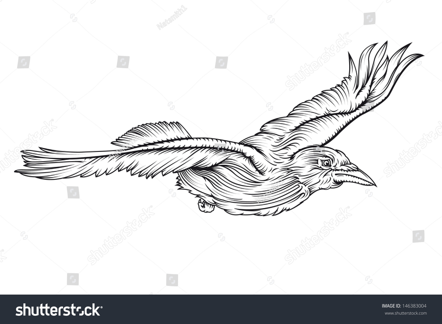 Line Drawing Editor : Vector line drawing of a crow flying