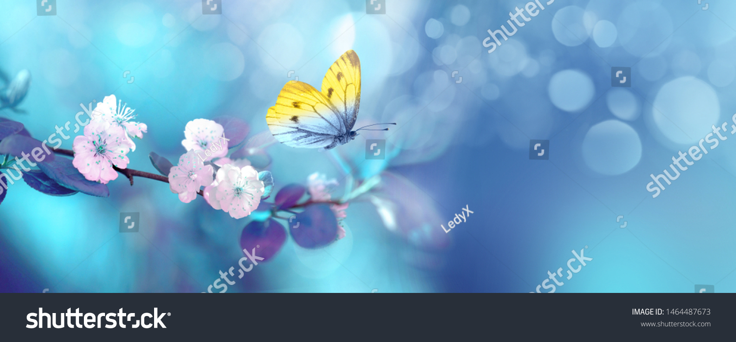 Beautiful blue yellow butterfly in flight and branch of flowering apricot tree in spring at Sunrise on light blue and violet background macro. Elegant artistic image nature. Banner format, copy space. #1464487673