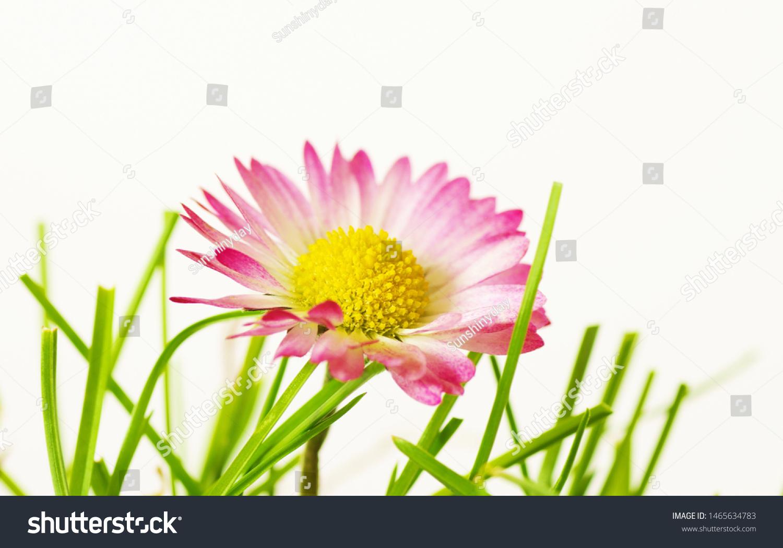 stock-photo-daisy-and-grass-isolated-clo