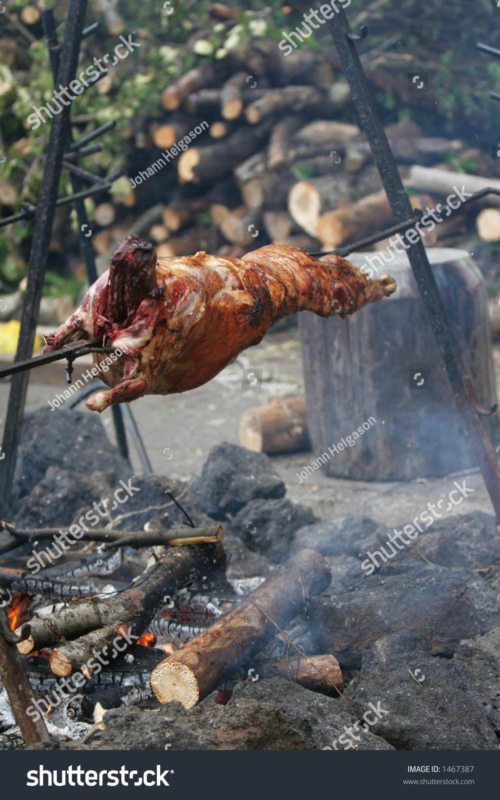 lamb being roasted whole on spit stock photo 1467387