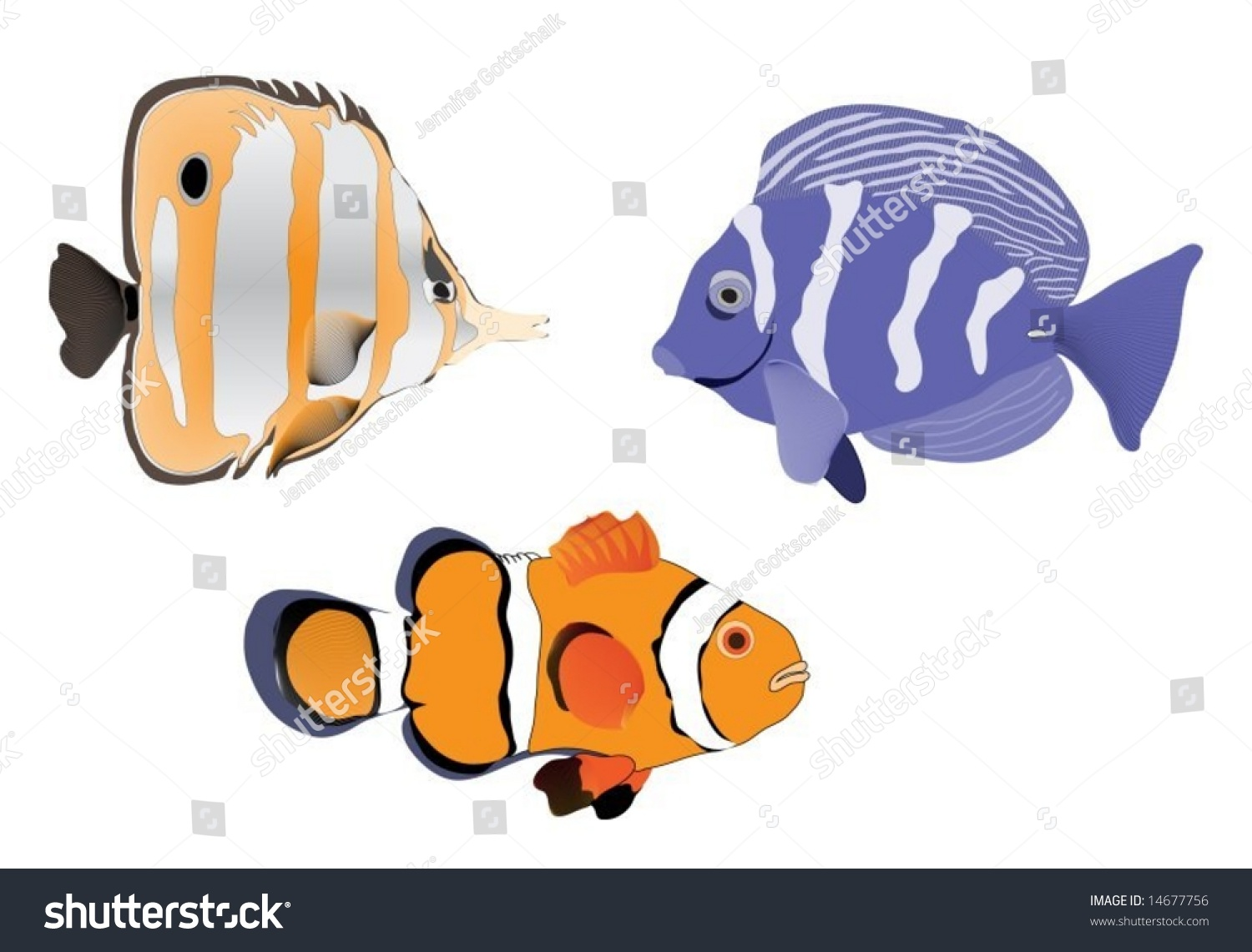 Tropical fish vector stock vector 14677756 shutterstock tropical fish vector jeuxipadfo Images