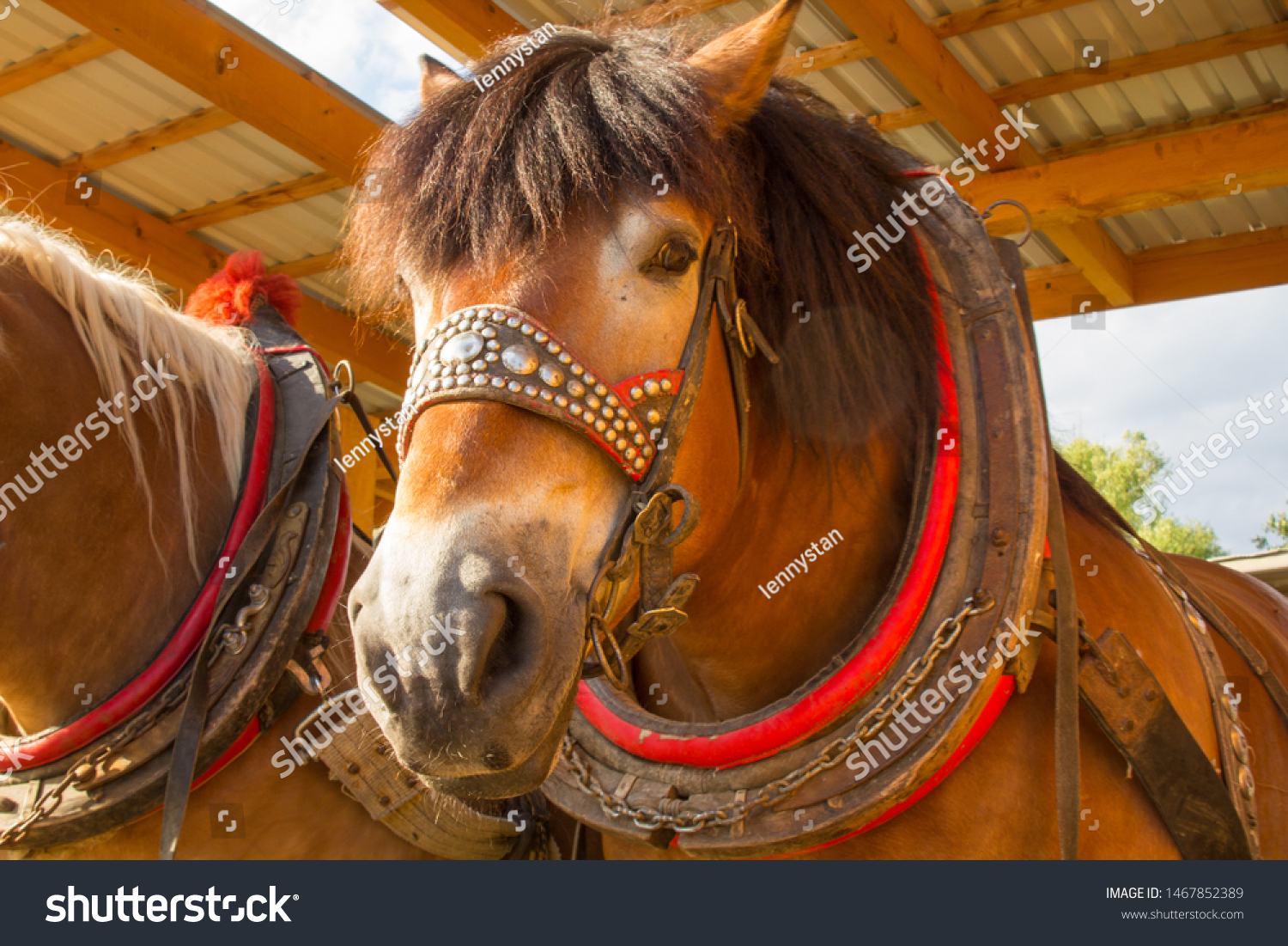 stock-photo-close-up-on-brown-horses-hea