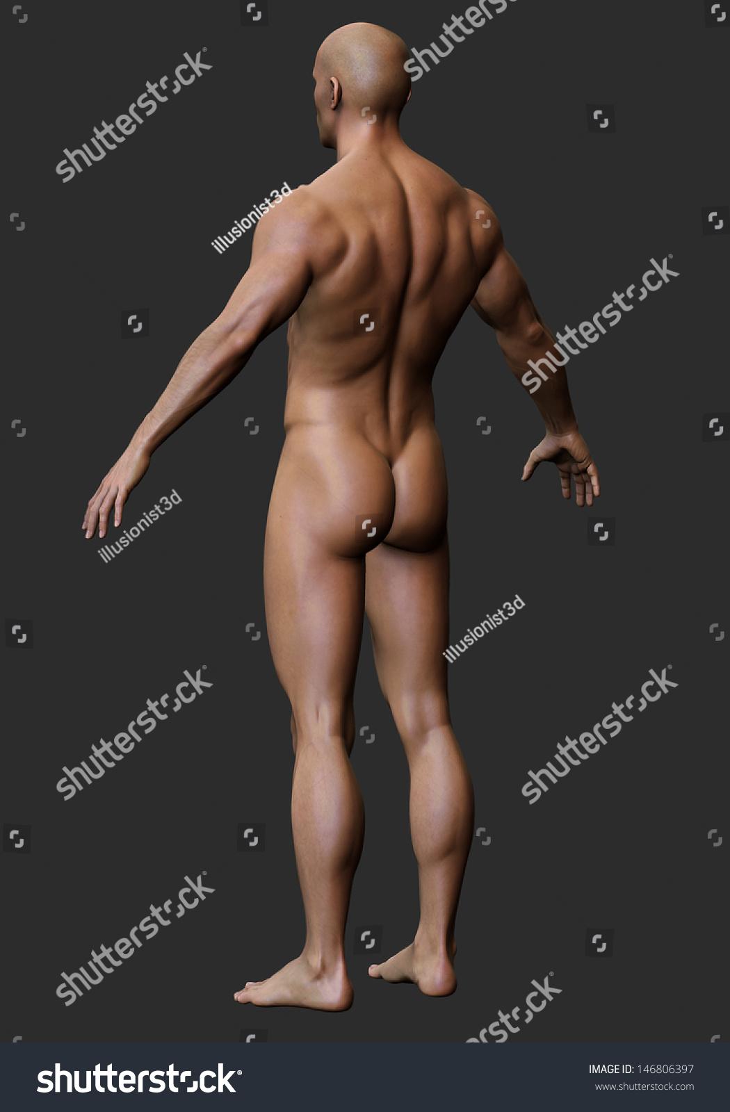 3d male body anatomy naked stock illustration 146806397 - shutterstock