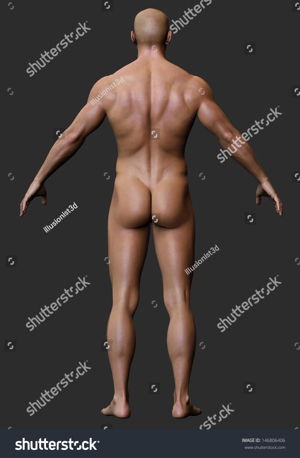 3 D Male Body Anatomy Naked Stockillustration 146806406 Shutterstock
