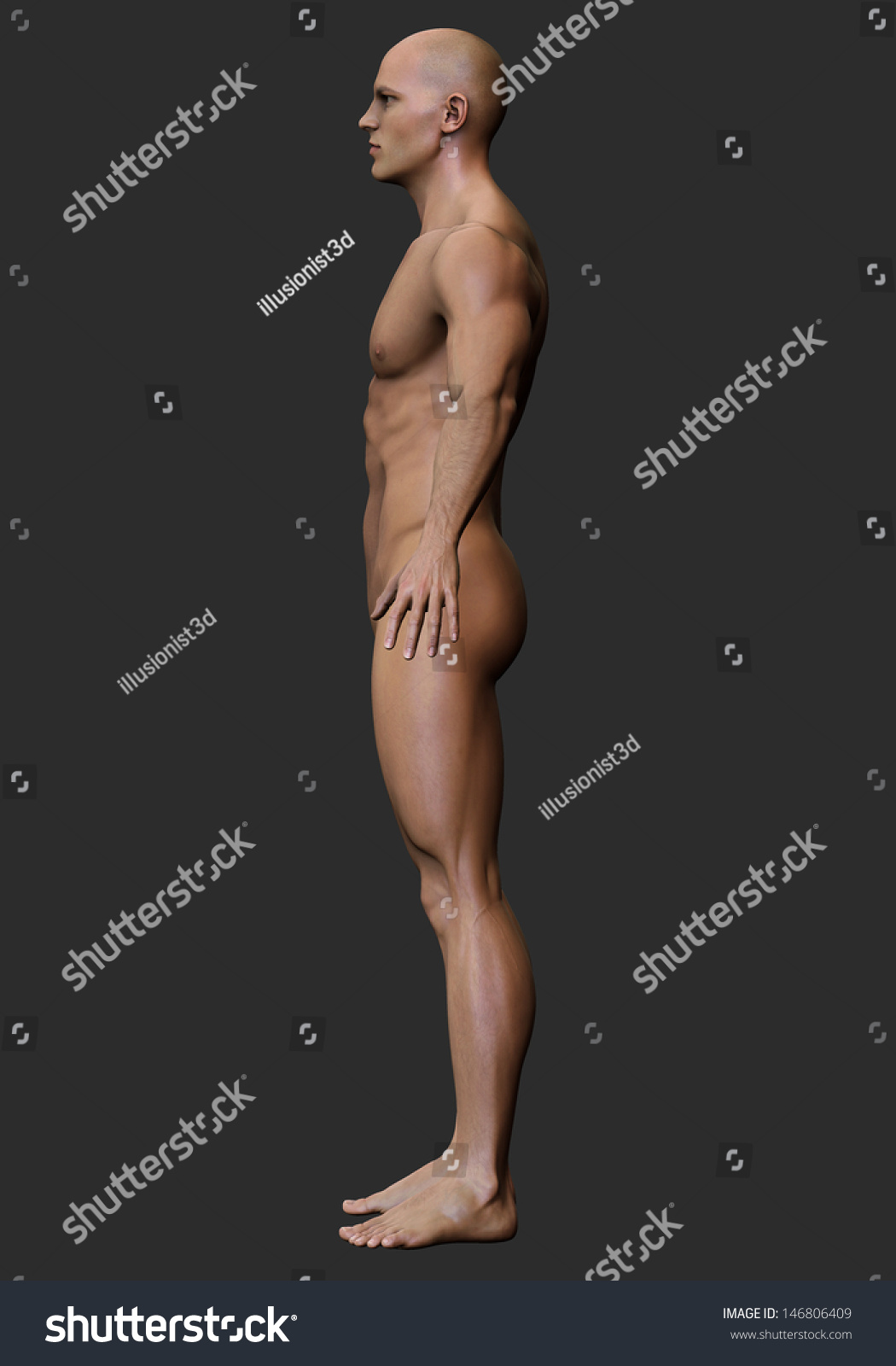 3d male body anatomy naked stock illustration 146806409 - shutterstock