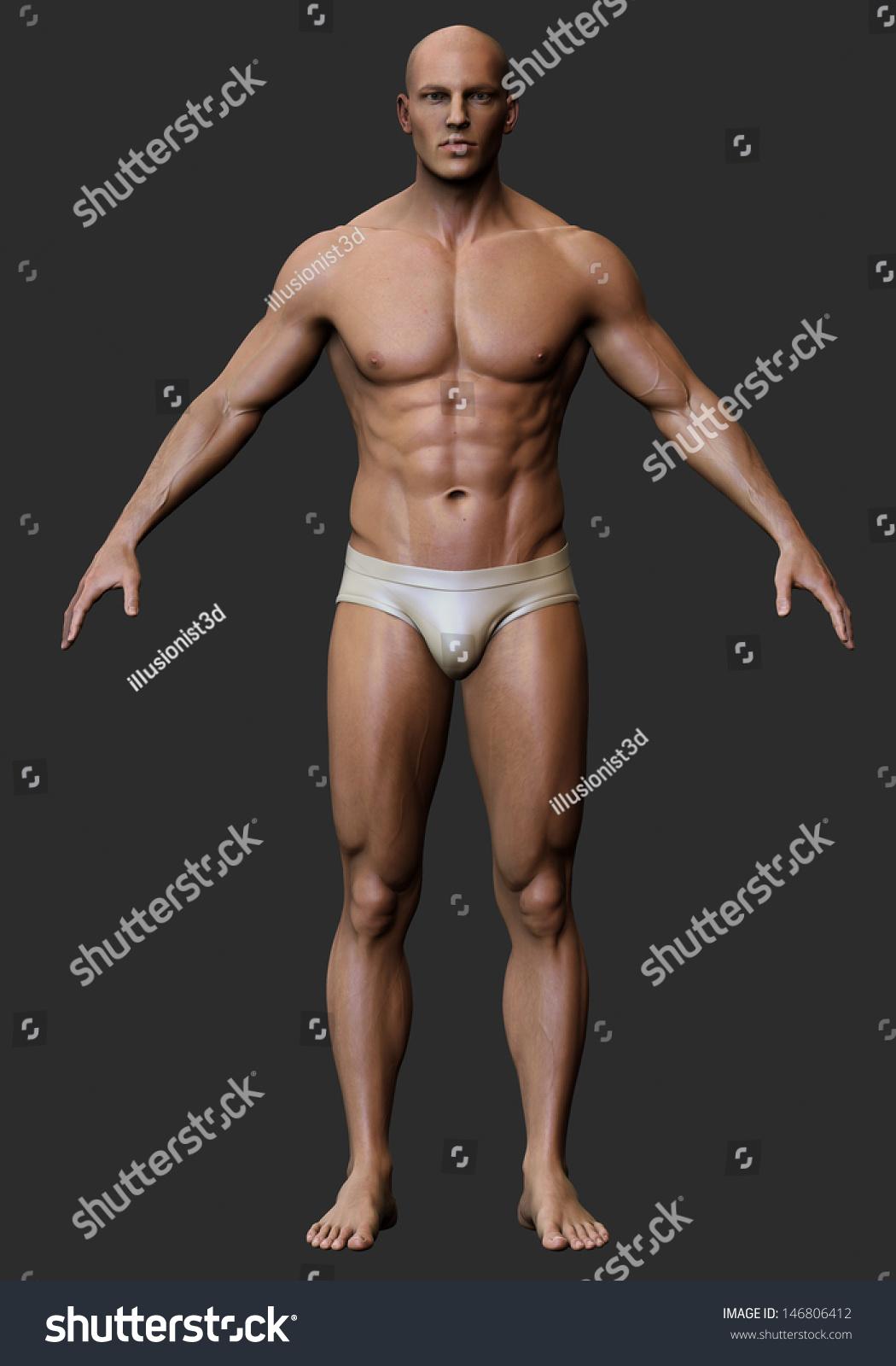 3 D Male Body Anatomy Stock Illustration - Royalty Free Stock ...