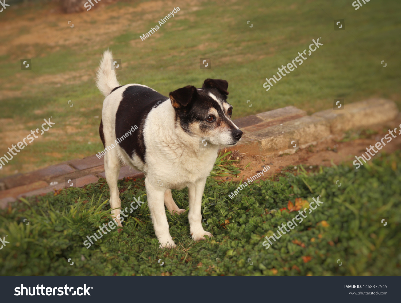 Doggy mature 12 reasons