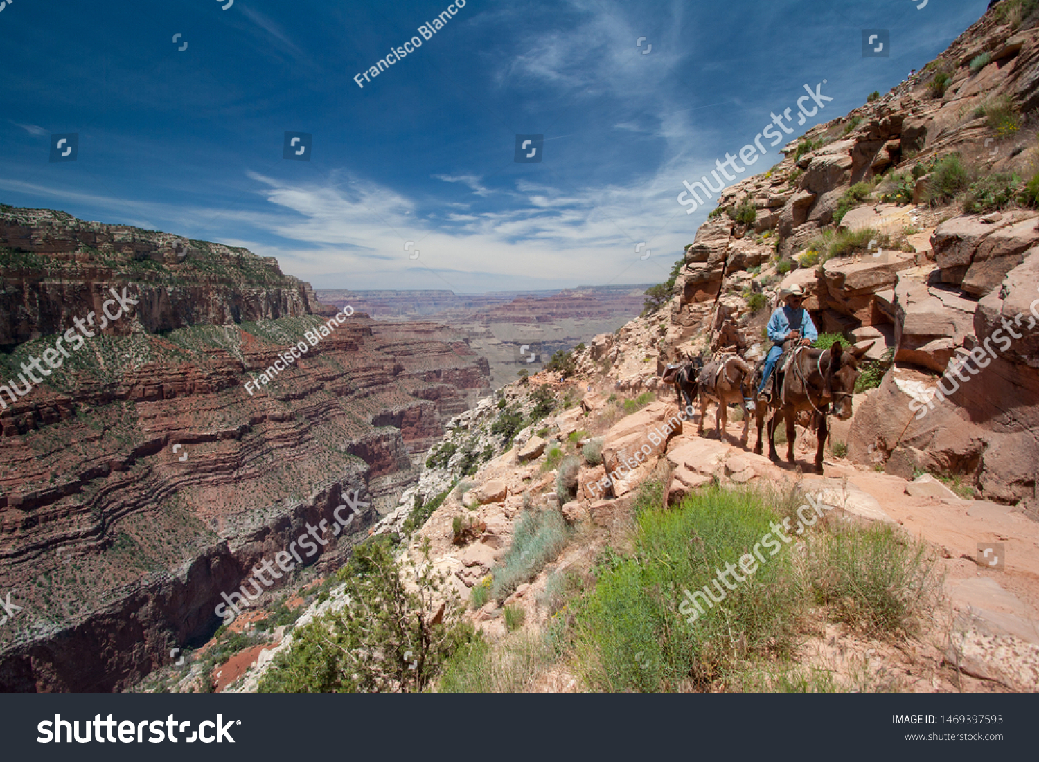 Grand Canyon National Park Arizona June Stock Photo Edit