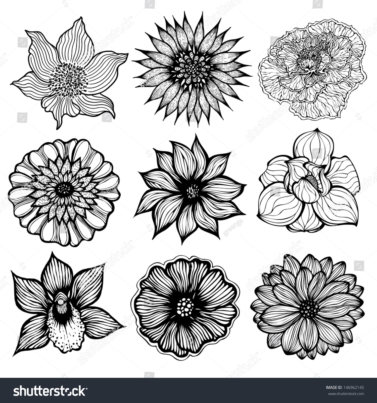 Set Of 9 Different Hand Drawn Flowers, Black And White ...
