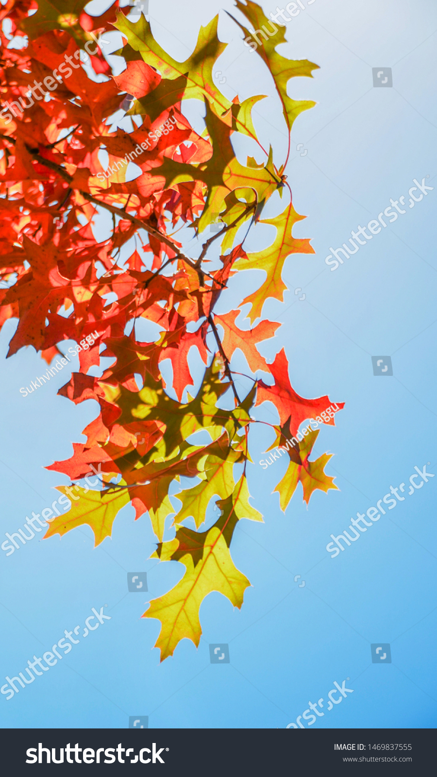 Autumn Colourful Foliage Different Flowers Fall Nature Parks
