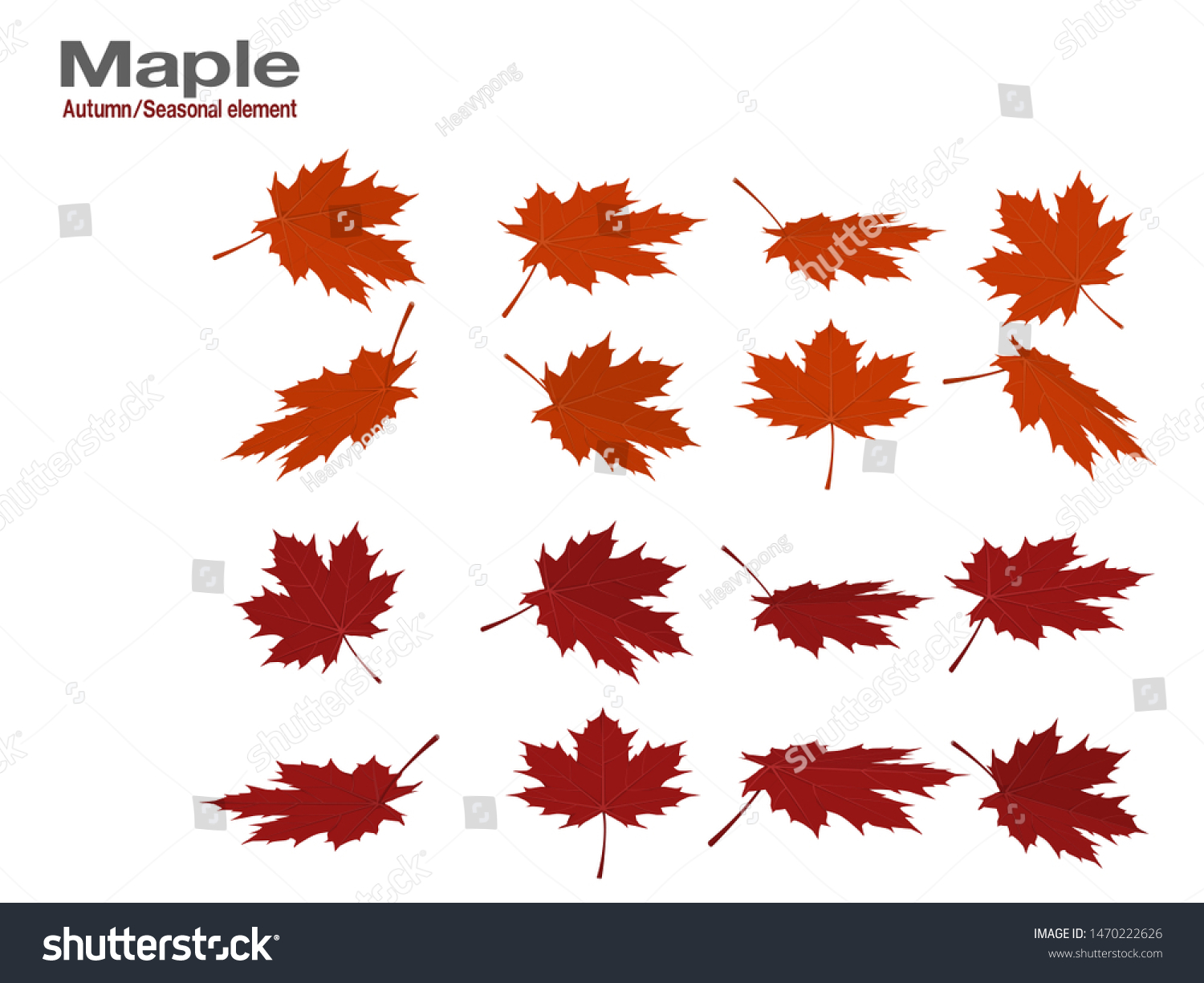 Set Red Maple Leaves On Transparent Stock Vector Royalty Free 1470222626