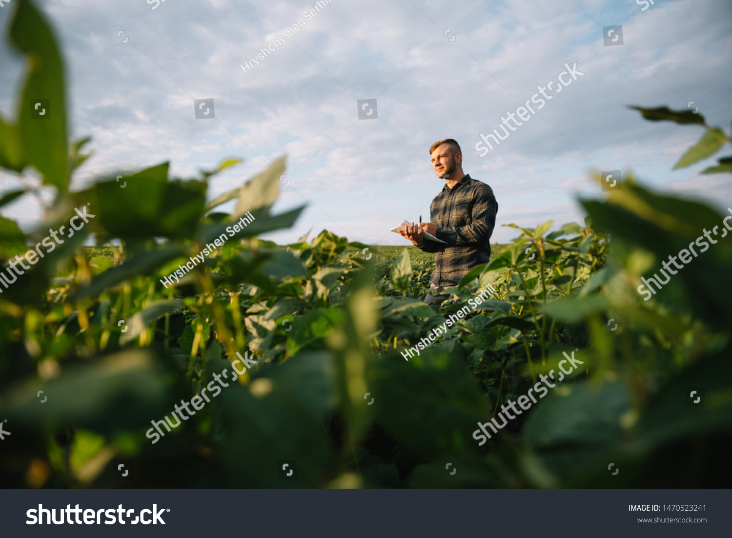 Agronomist inspecting soya bean crops growing in the farm field. Agriculture production concept. young agronomist examines soybean crop on field in summer. Farmer on soybean field #1470523241