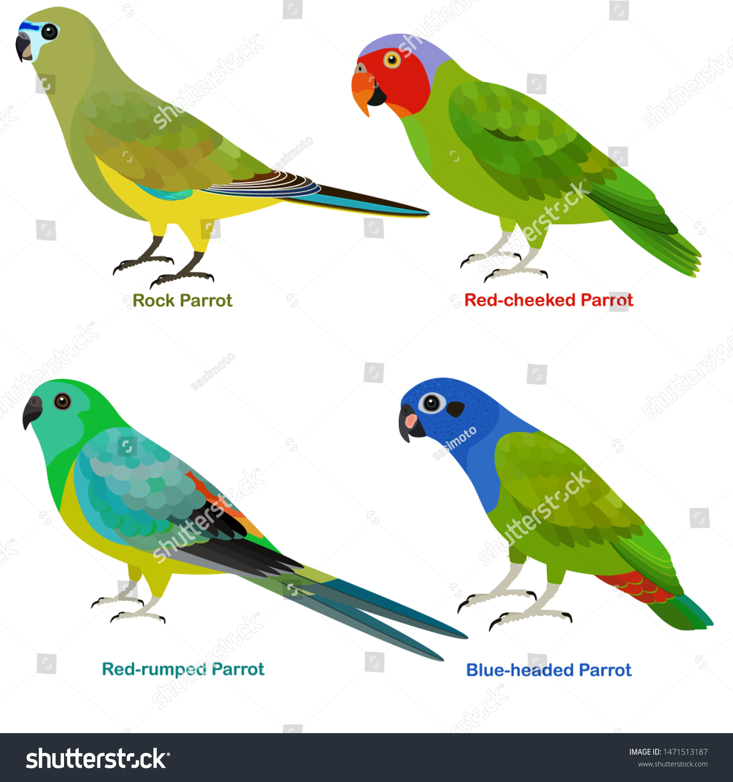 Cute Australia Parrots Bird Vector Illustration Stock Vector Royalty Free 1471513187