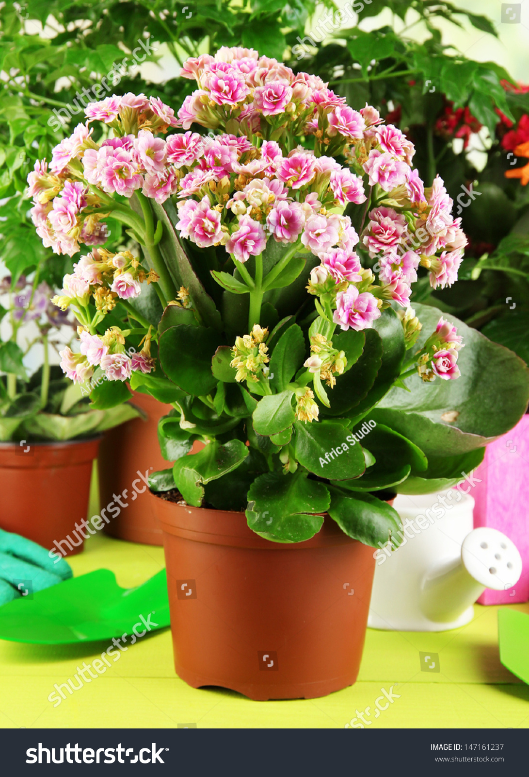 Beautiful Flowers Pots On Wooden Table Stock Photo Edit Now