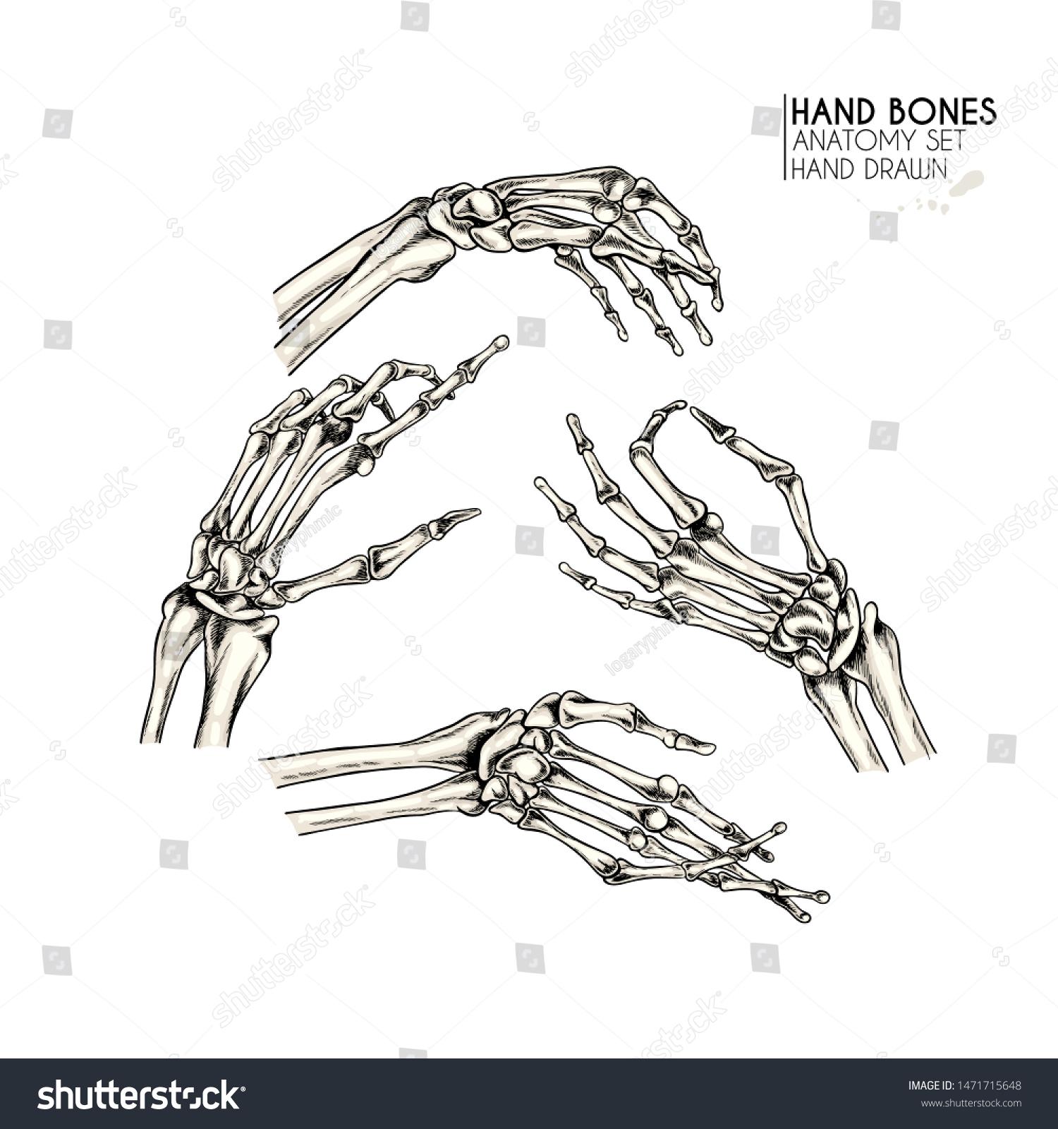 Hand Drawn Anatomy Set Vector Human Stock Vector Royalty Free 1471715648