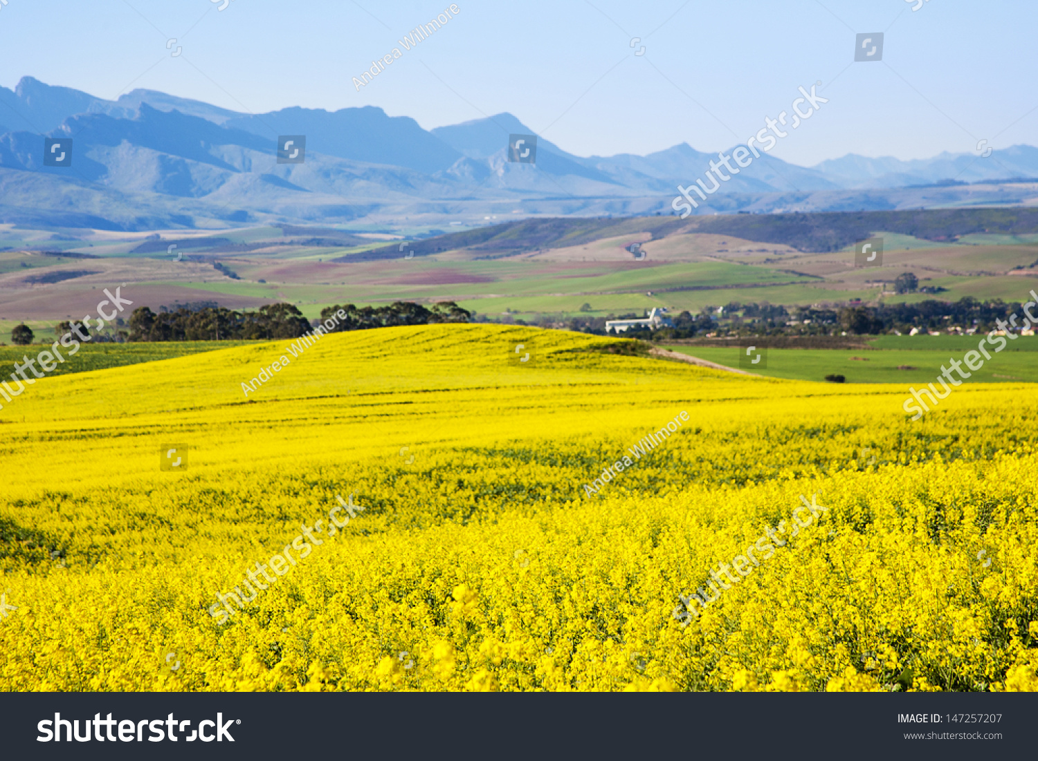 Scenic Rapeseed Fields Along Garden Route N Stock Photo   With Outstanding Rapeseed Fields Along The Garden Route N South Africa Rapeseed Is Used  To With Extraordinary Round Garden Buildings Also Bq Garden Vacs In Addition In The Garden And Metal Garden Benches For Sale As Well As Iveagh Gardens Seating Chart Additionally Plants Vs Zombies Garden Warfare Playstation From Shutterstockcom With   Outstanding Rapeseed Fields Along Garden Route N Stock Photo   With Extraordinary Rapeseed Fields Along The Garden Route N South Africa Rapeseed Is Used  To And Scenic Round Garden Buildings Also Bq Garden Vacs In Addition In The Garden From Shutterstockcom