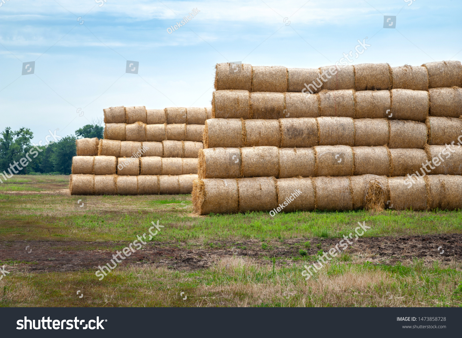 Hay bales. Hay bales are stacked on the field in stacks. Harvesting in agriculture. #1473858728