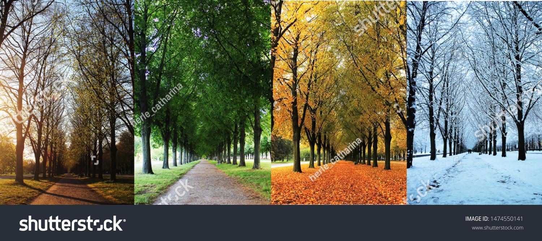 The four seasons of the herrenhausen garden alley in hanover / Germany - spring, summer, autumn, winter #1474550141