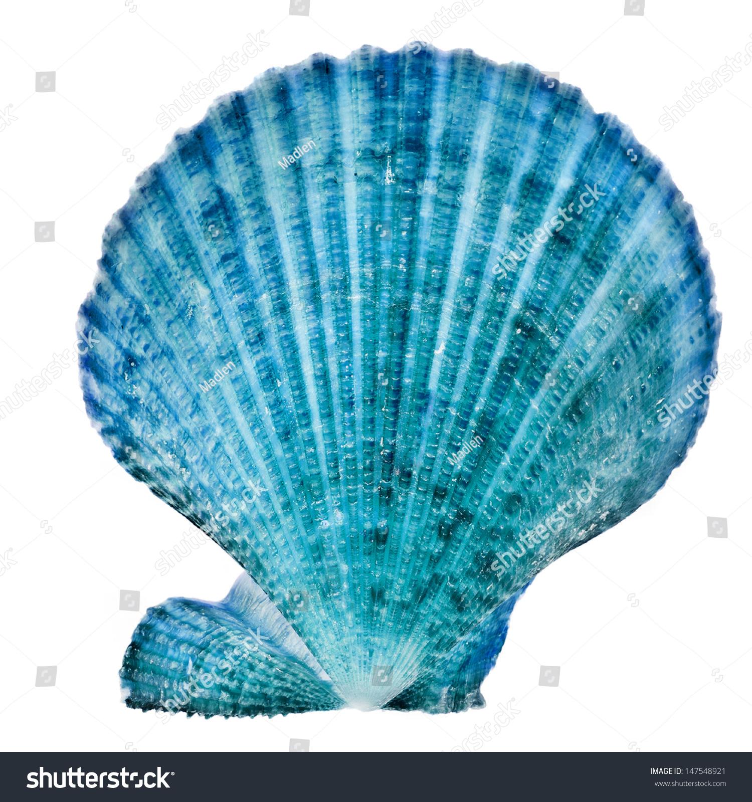 One Blue Seashell Close Isolated On Foto de stock (libre de regalías ...