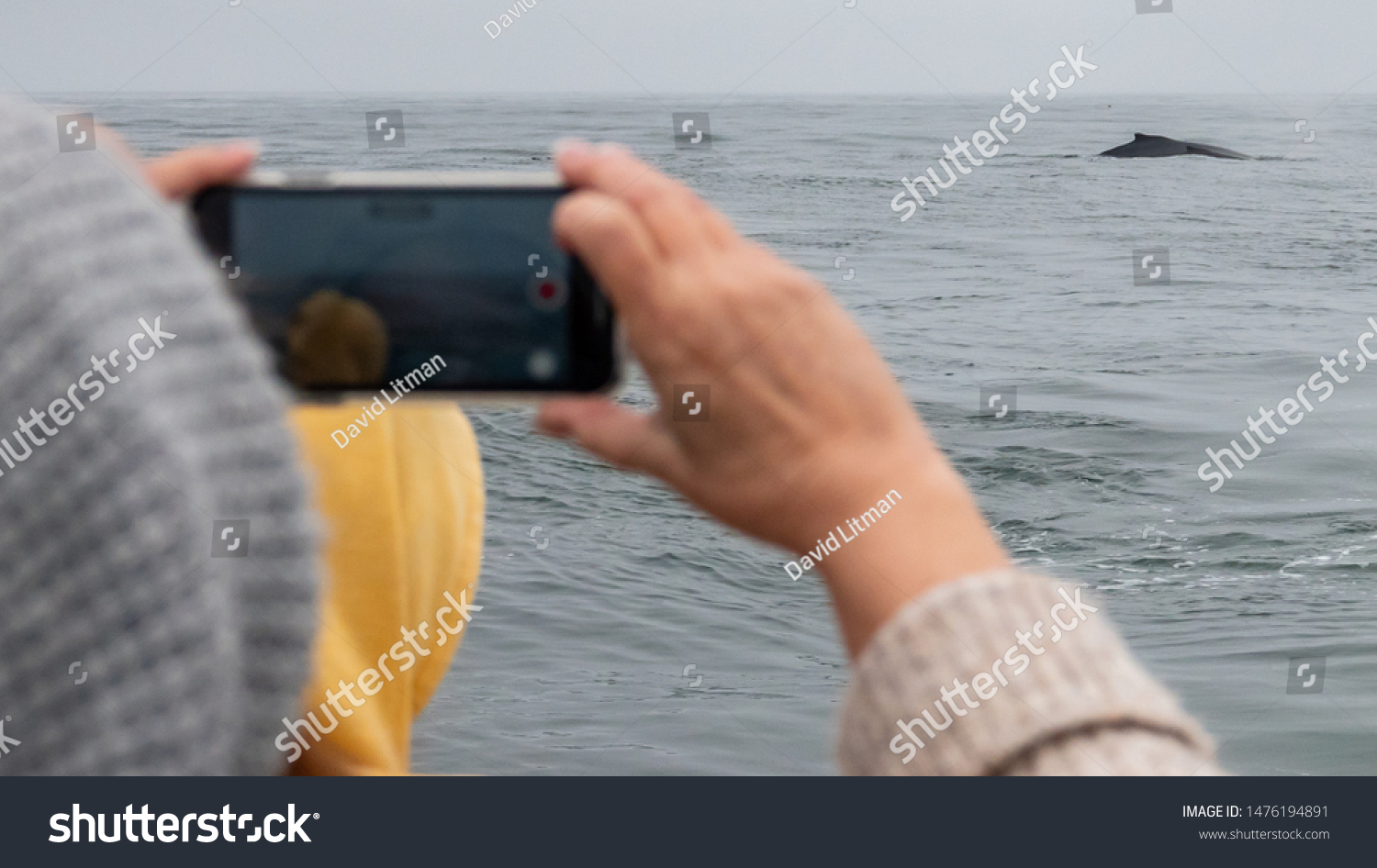Monterey Bay, California - August 7, 2019: A tourist on a whale watching boat uses her cell phone to capture images and videos of humpback whales in the Monterey Bay of central California.