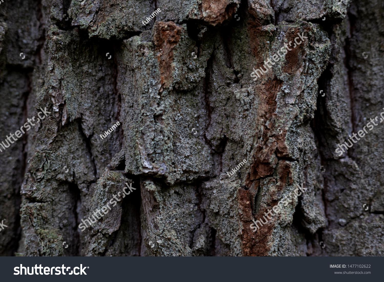 Texture Convex Oak Bark Forest Tree Stock Photo Edit Now 1477102622