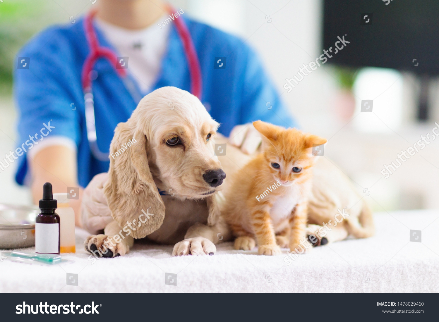Vet examining dog and cat. Puppy and kitten at veterinarian doctor. Animal clinic. Pet check up and vaccination. Health care. #1478029460