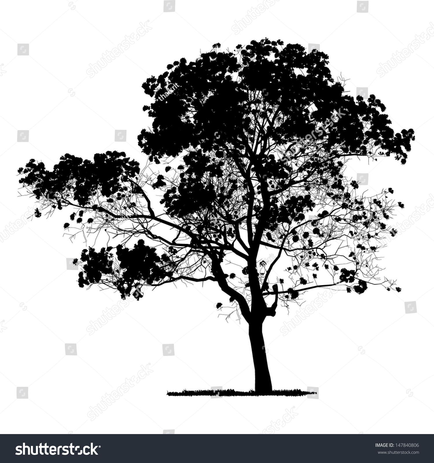 Vector Drawing Tree Detailed Vector Stock-Vektorgrafik 147840806 ...