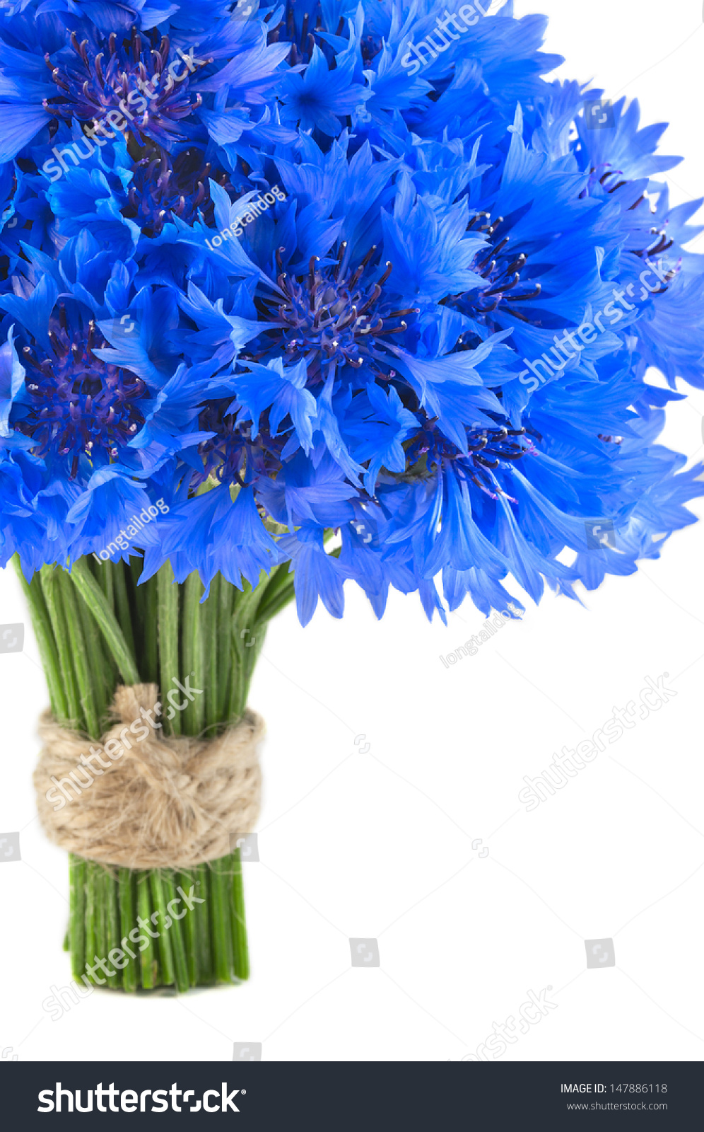 Bouquet Beautiful Vivid Blue Flowers Cornflower Stock Photo Edit