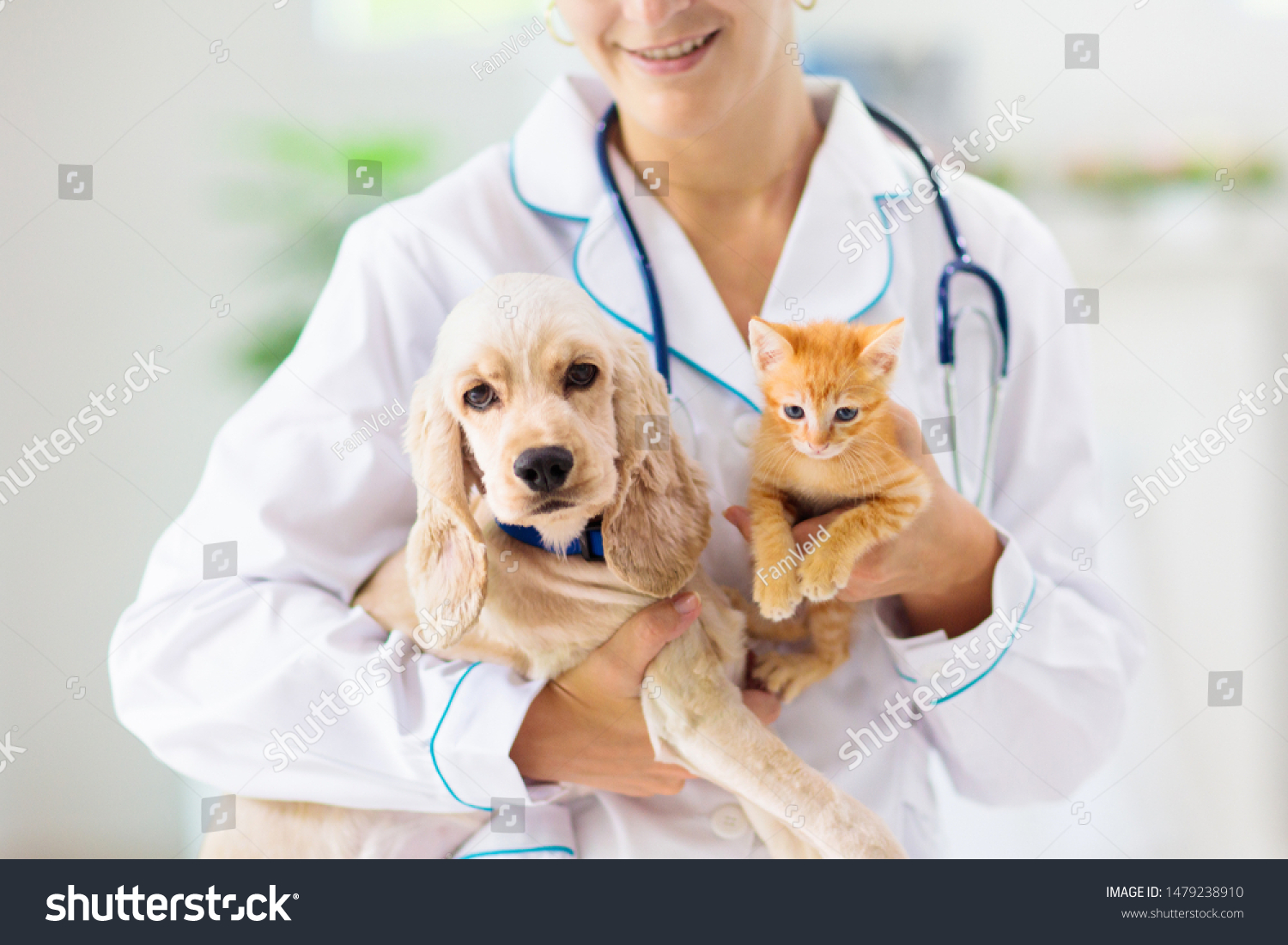 Vet examining dog and cat. Puppy and kitten at veterinarian doctor. Animal clinic. Pet check up and vaccination. Health care. #1479238910