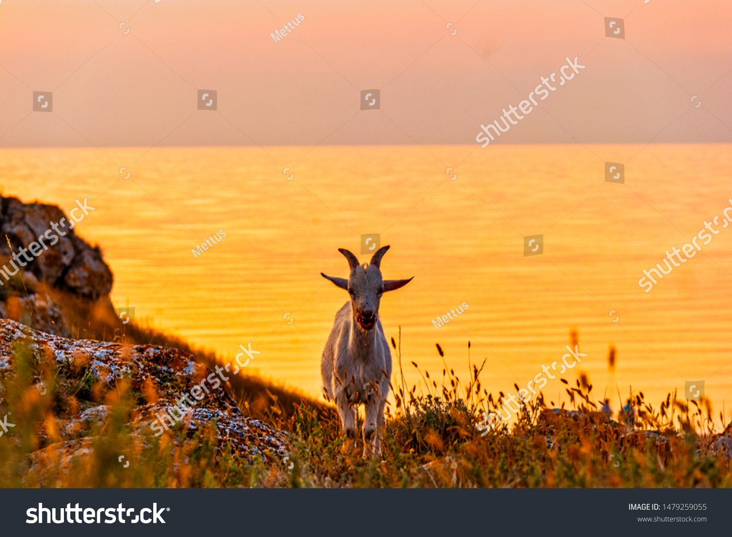 stock-photo-front-view-of-the-goat-stand