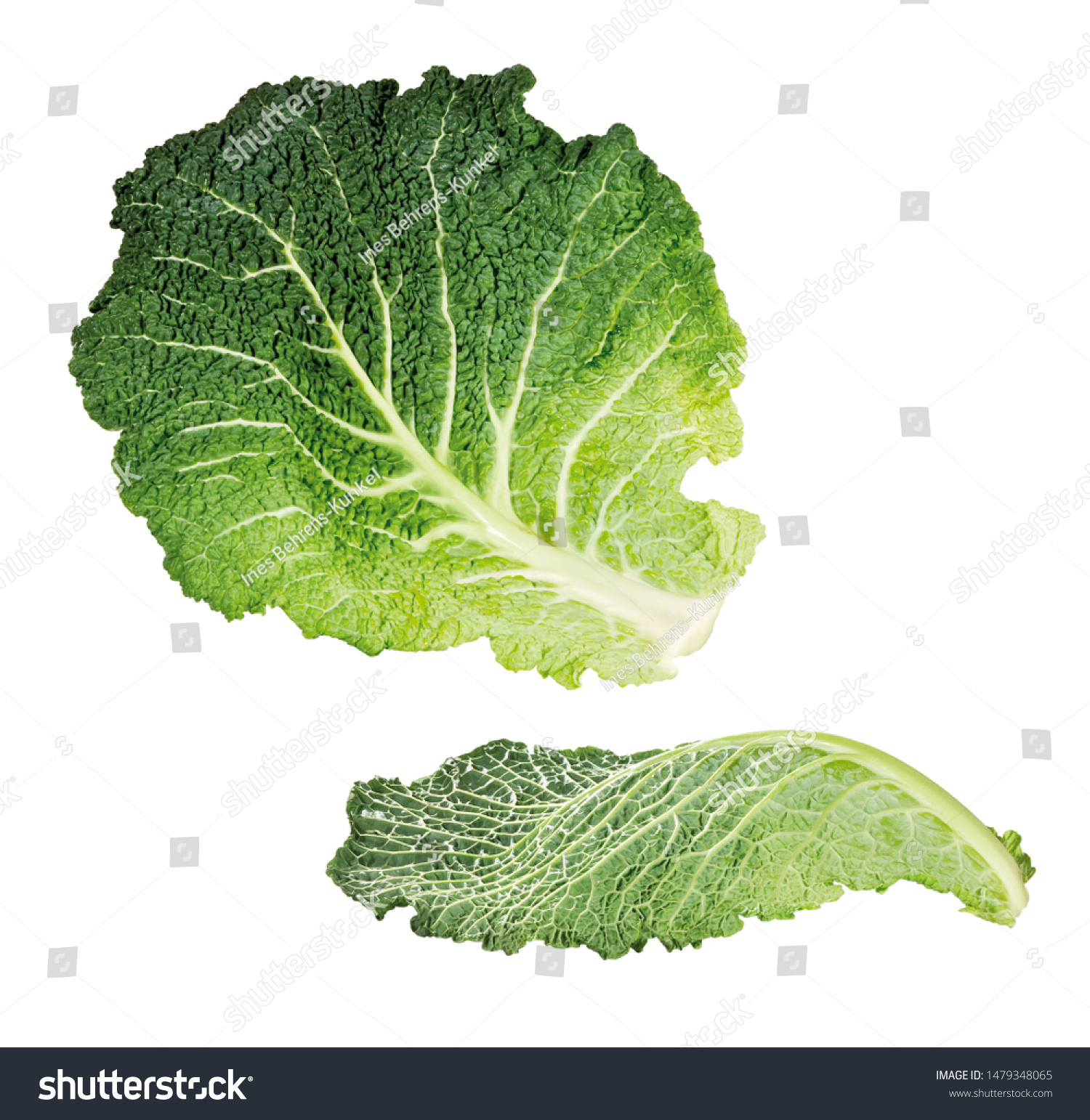 Two Savoy Cabbage Leaves Isolated Stock Photo Edit Now 1479348065