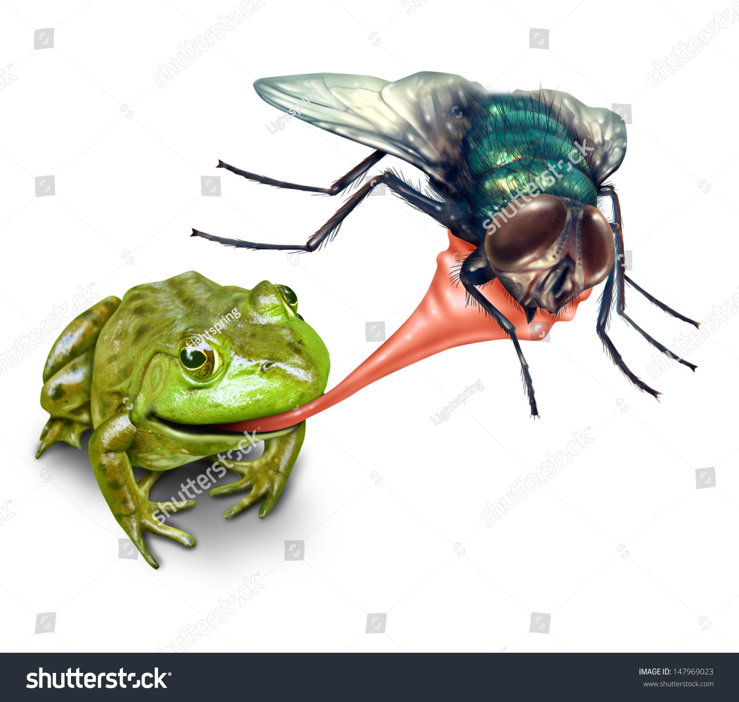 Image result for toad eating a fly