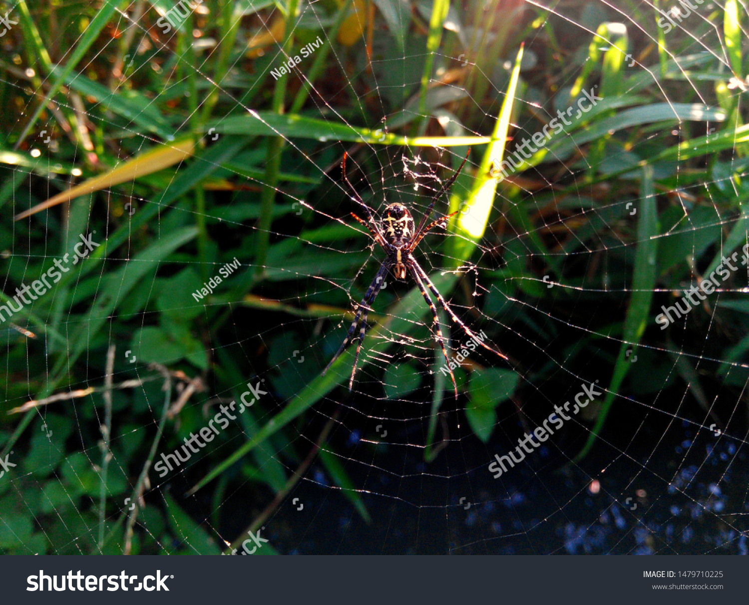 a small spider above a cobweb, in a small river, in green, natural and cool fields #1479710225
