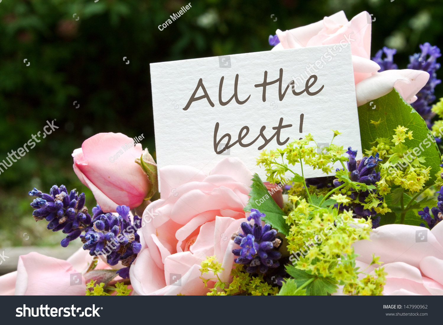 Pink roses lavender card lettering all stock photo for What are the best flowers