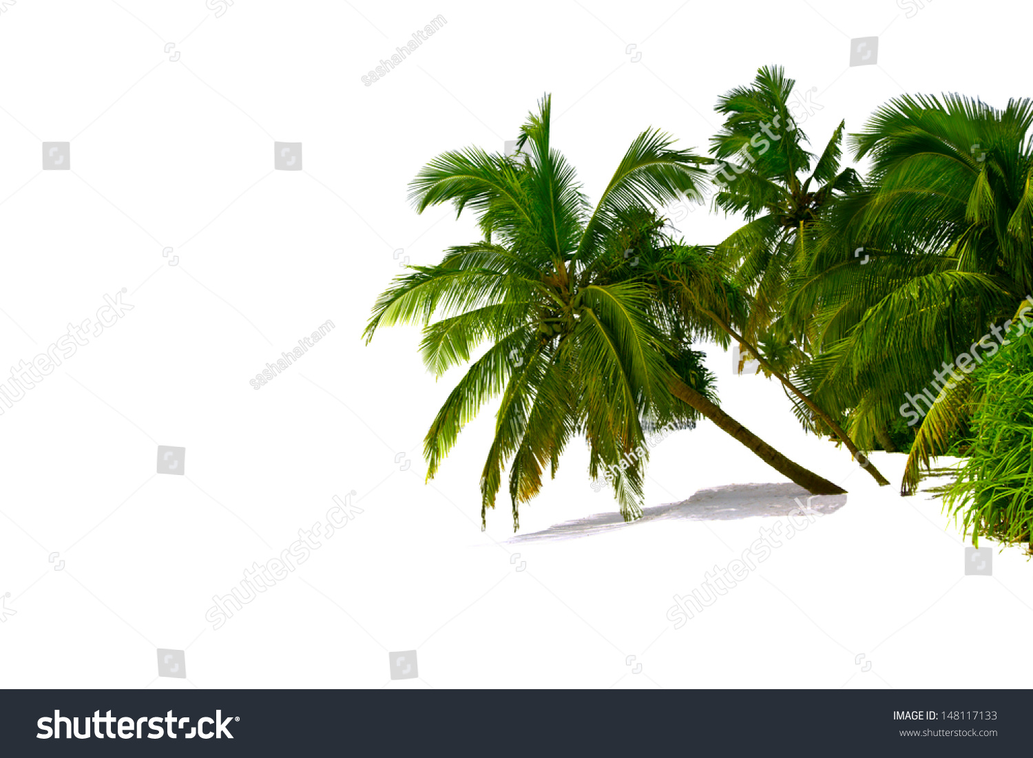 Colorful Palm Trees Isolated Over White Stock Photo 148117133 ...