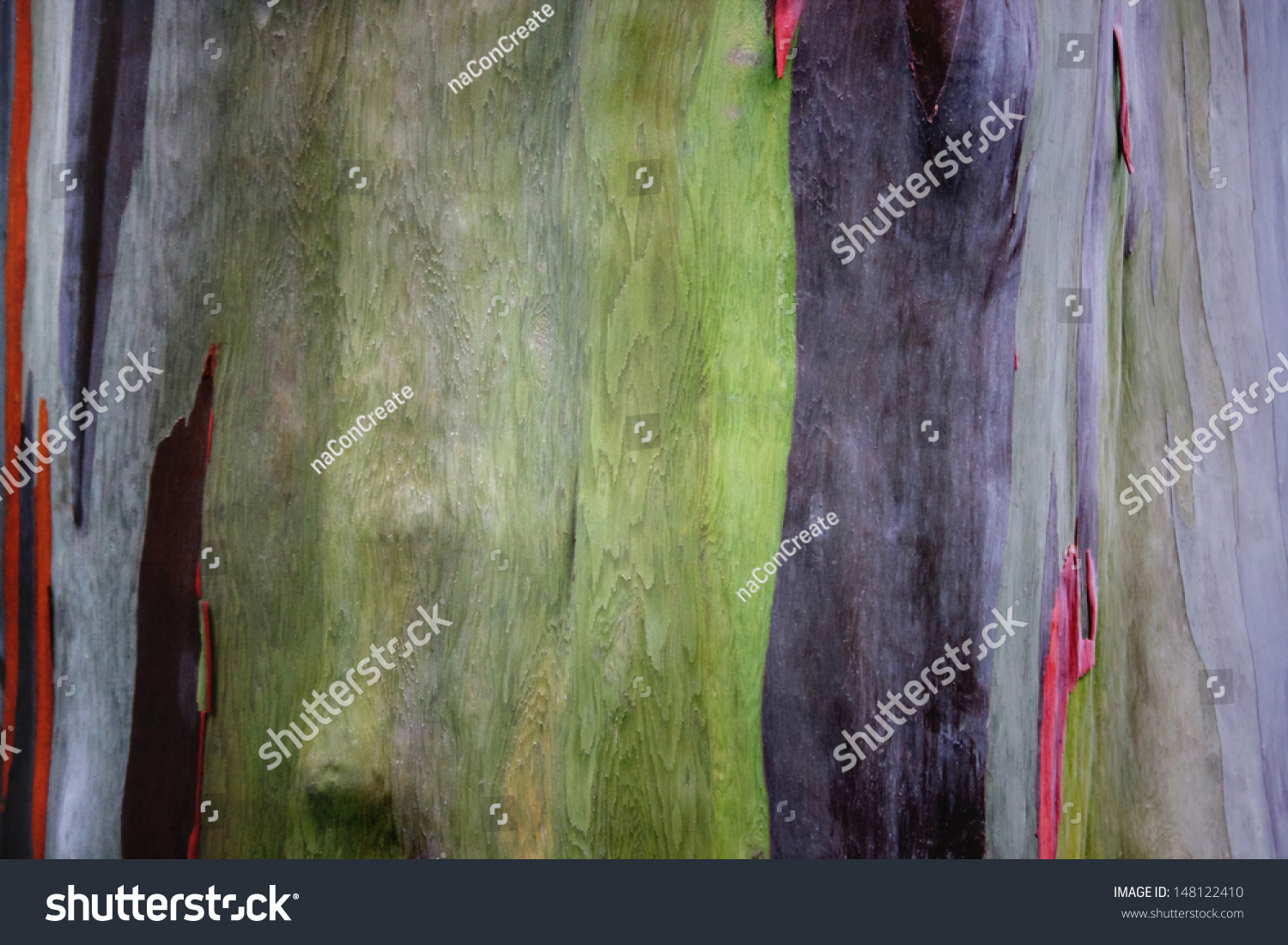 Colorful Abstract Pattern Eucalyptus Tree Bark Stock Photo (Royalty ...