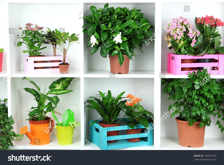 Beautiful Flowers Pots On White Shelves Stock Photo 148252793