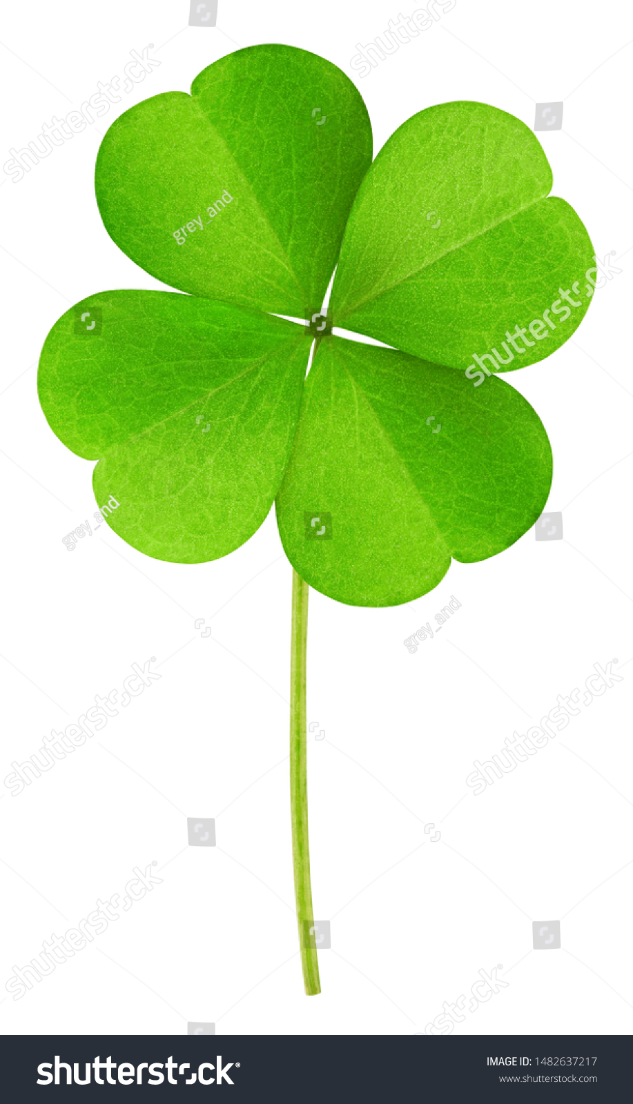 clover isolated on white background, clipping path, full depth of field #1482637217