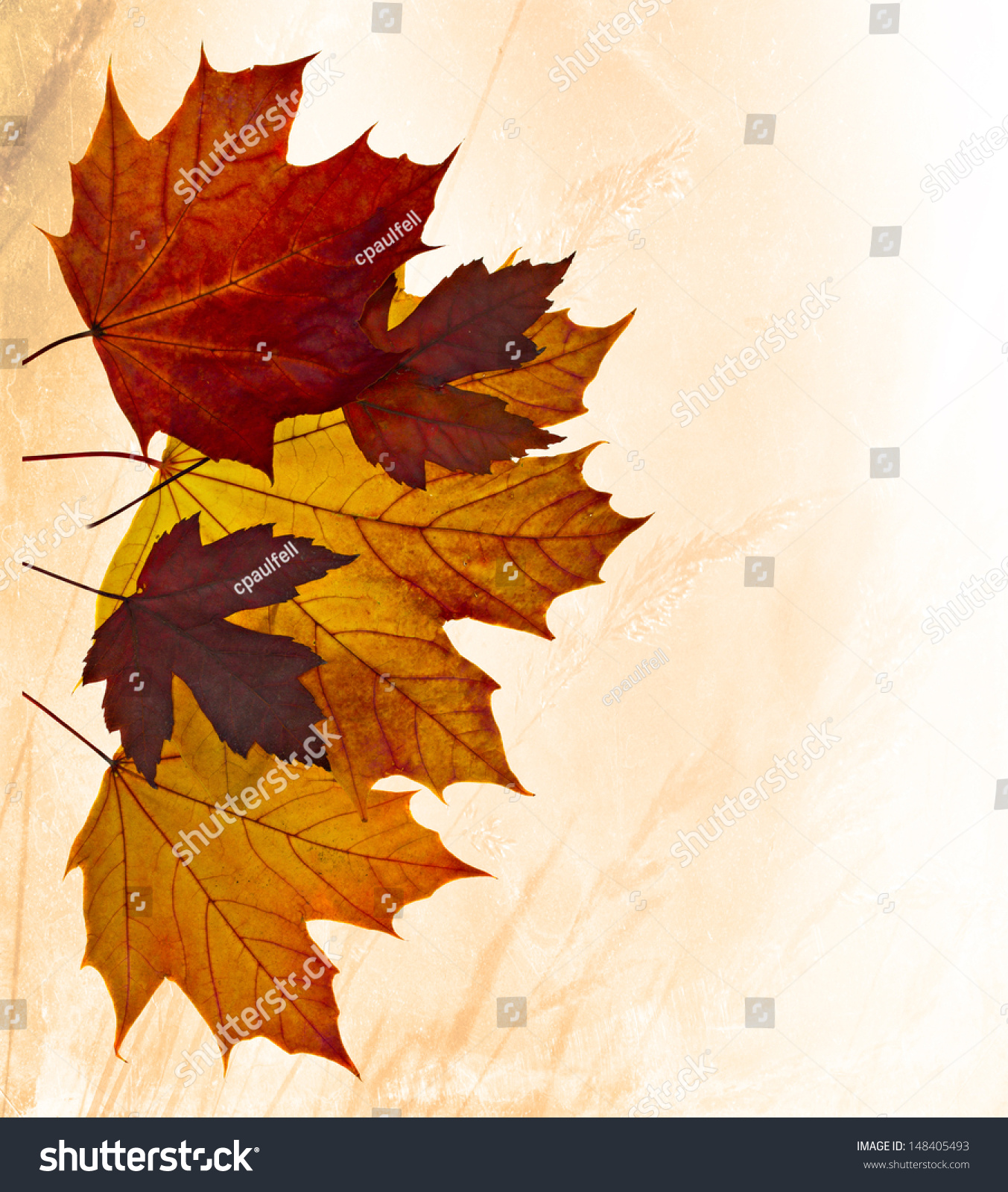 stock-photo-colorful-autumn-leaves-with-