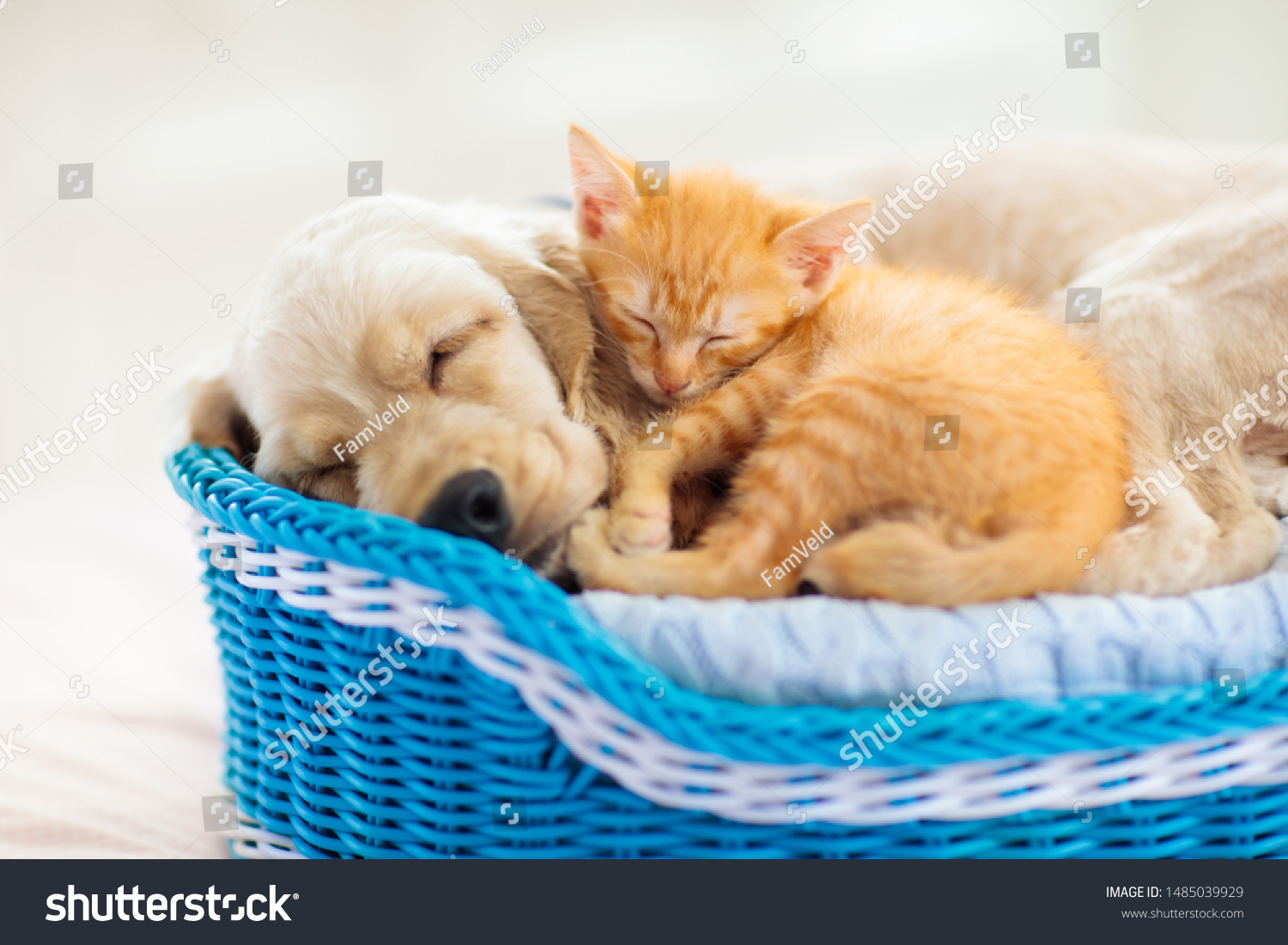 Cute Animal Cat Sleeping Silhouette, Lovely, Animal, Kitty PNG Transparent  Clipart Image and PSD File for Free Download